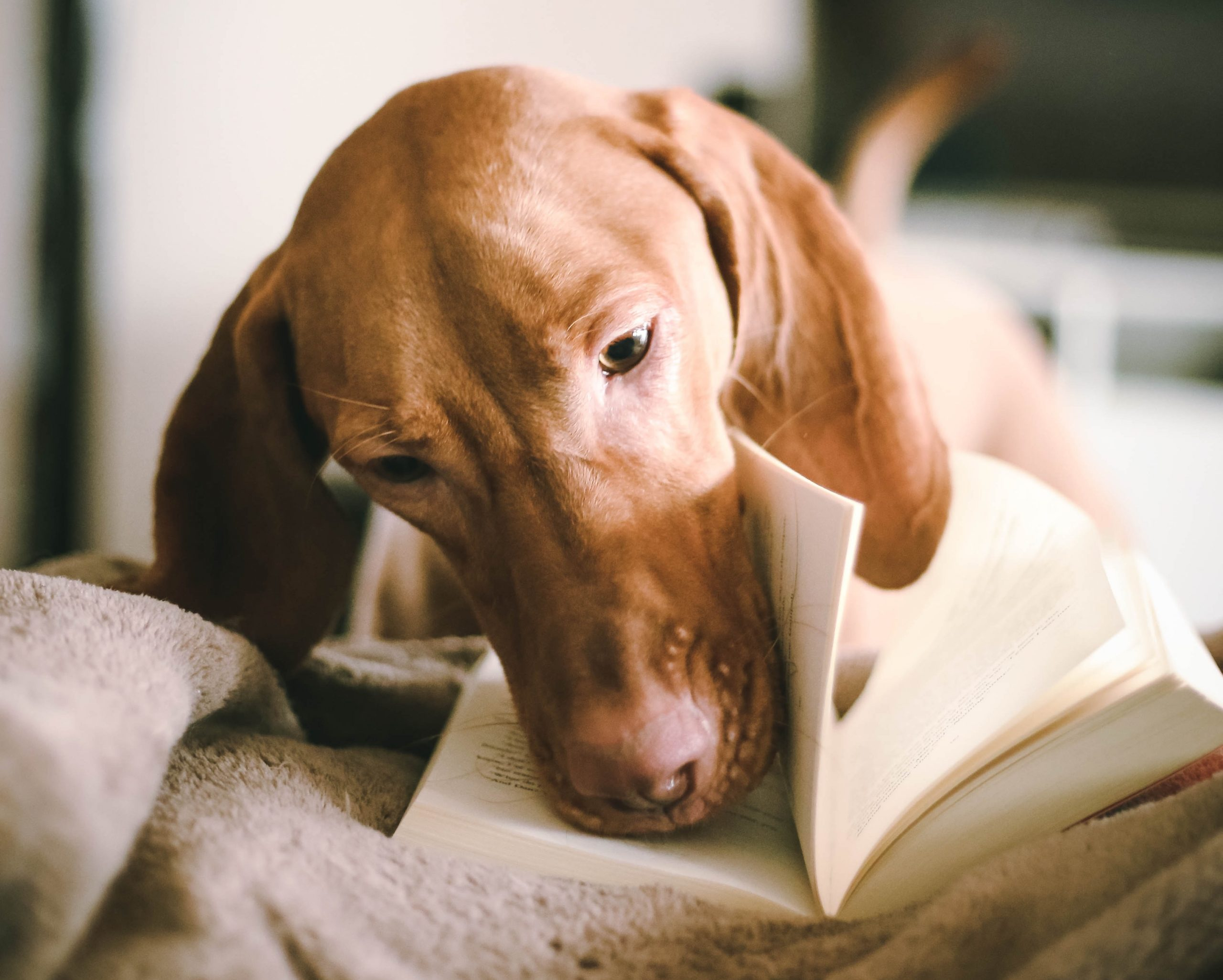 dog-themed books and movies