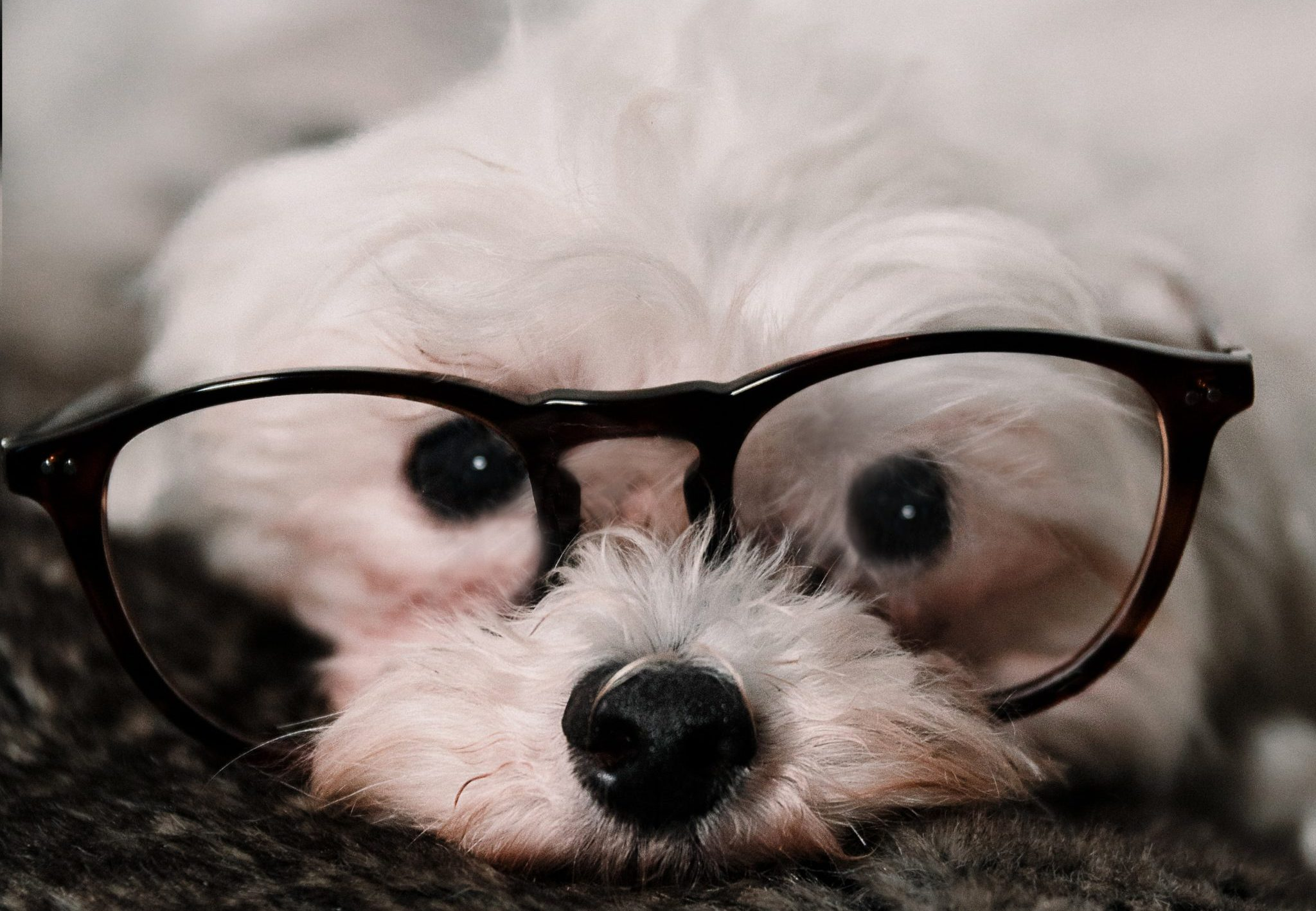 dog-friendly workplace